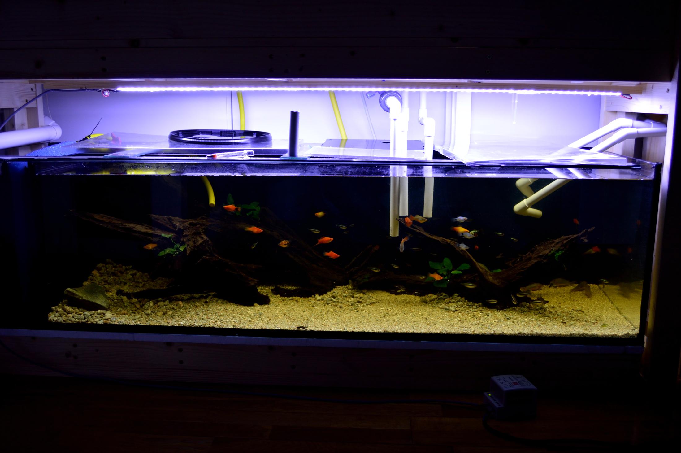 forum nicrew the tank now forums led planted lights aquarium light lighting